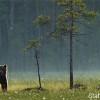 Bear by Staffan Widstrand