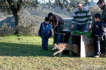 Linces de Silves libertados em Espanha