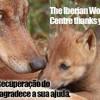 Campanha Não Deixe os Lobos sem Abrigo